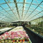 coltivazione su bancali sotto serra