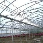 serra con copertura in policarbonato con apertura a mezzo arco (2)