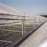serra in film plastico, con apertura verticale in gronda (2)